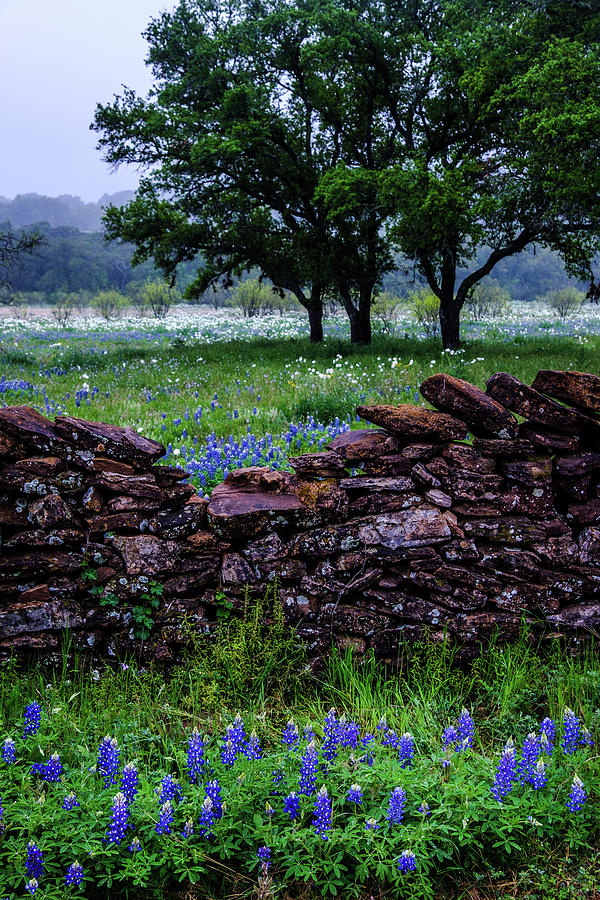 Over The Rock Fence by Johnny Boyd