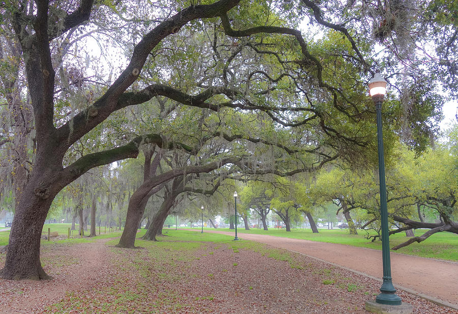 Overhanging Oaks In Hermann Park by Dan Sproul