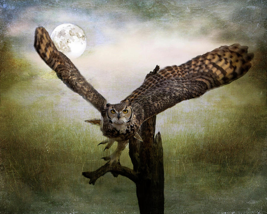 Owl and Moon by Barbara Manis