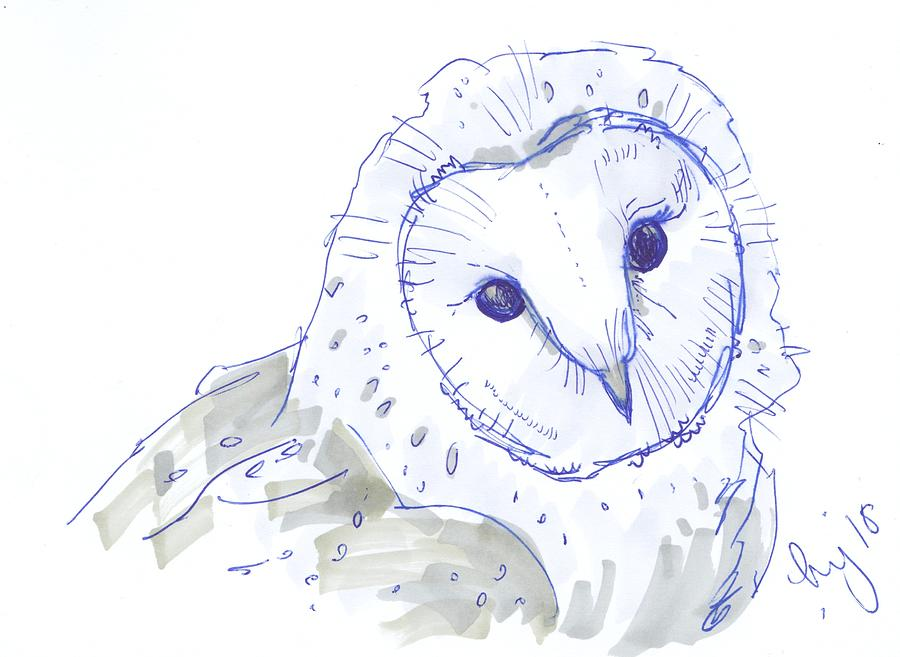 owl drawing by Mike Jory