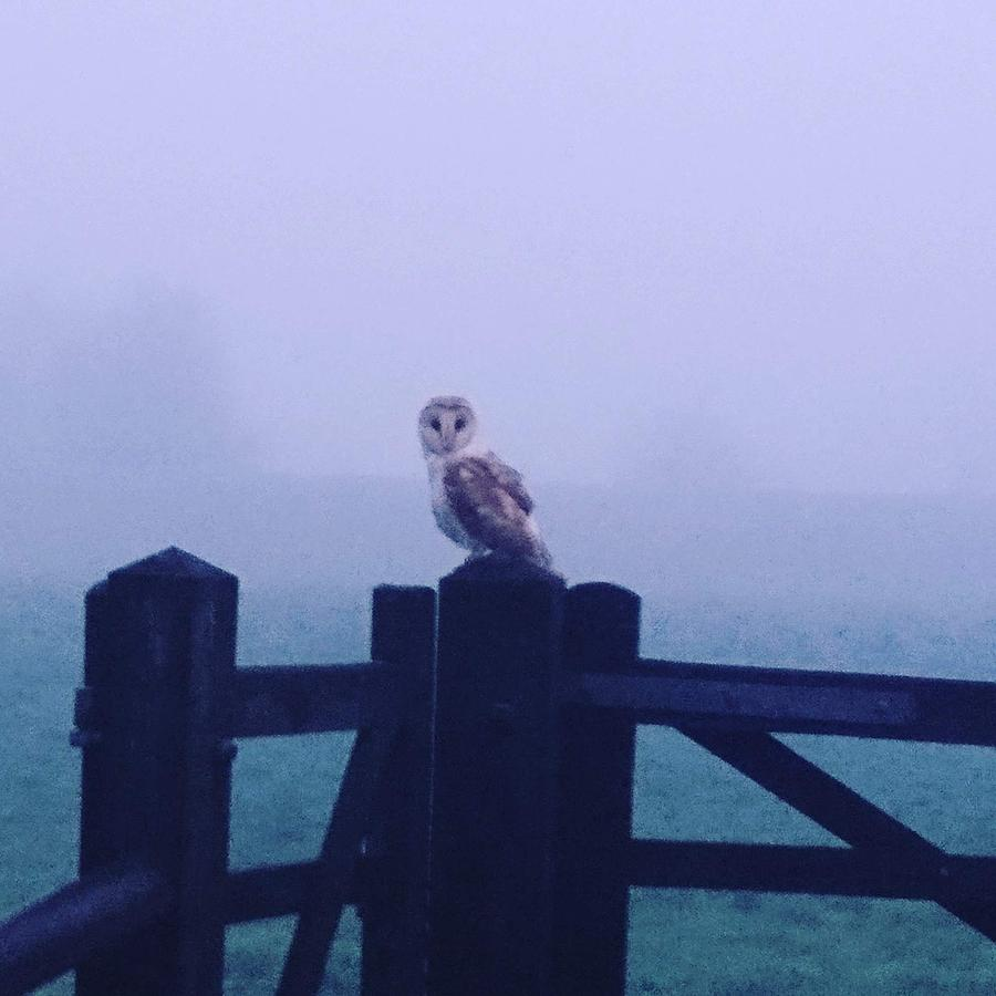 Owl in the Mist by Samuel Pye