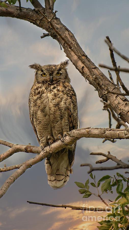 Owl  by Jim Hatch
