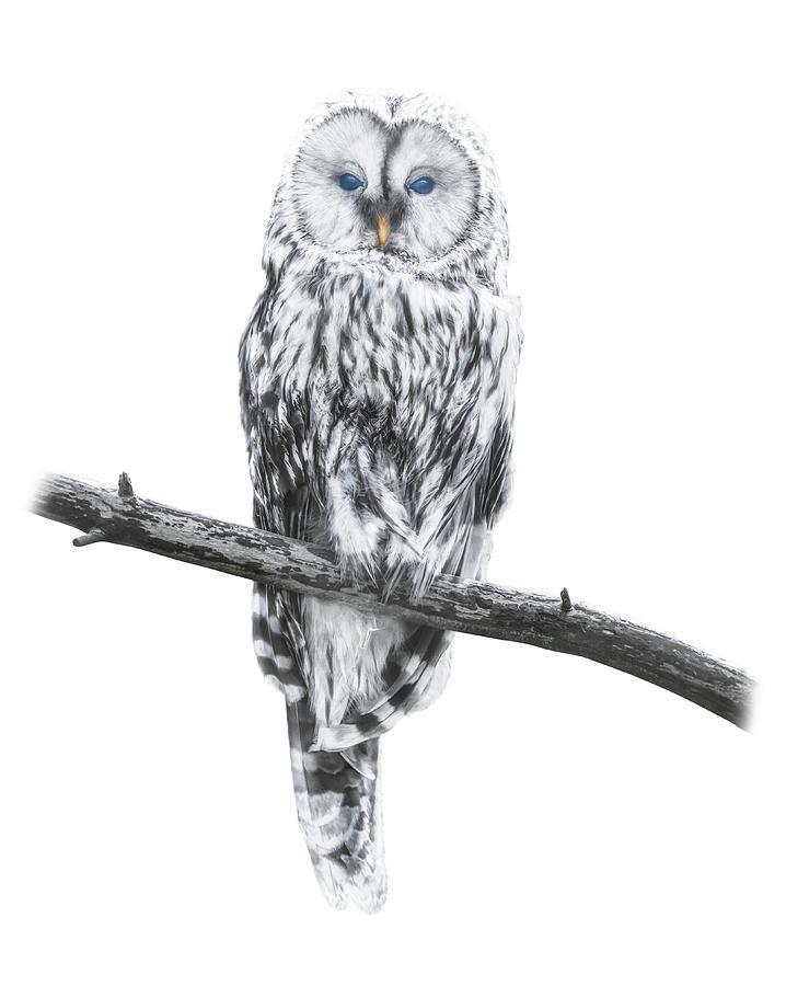 Charisma Photograph - Owl Of Freedom by Ingo Menhard