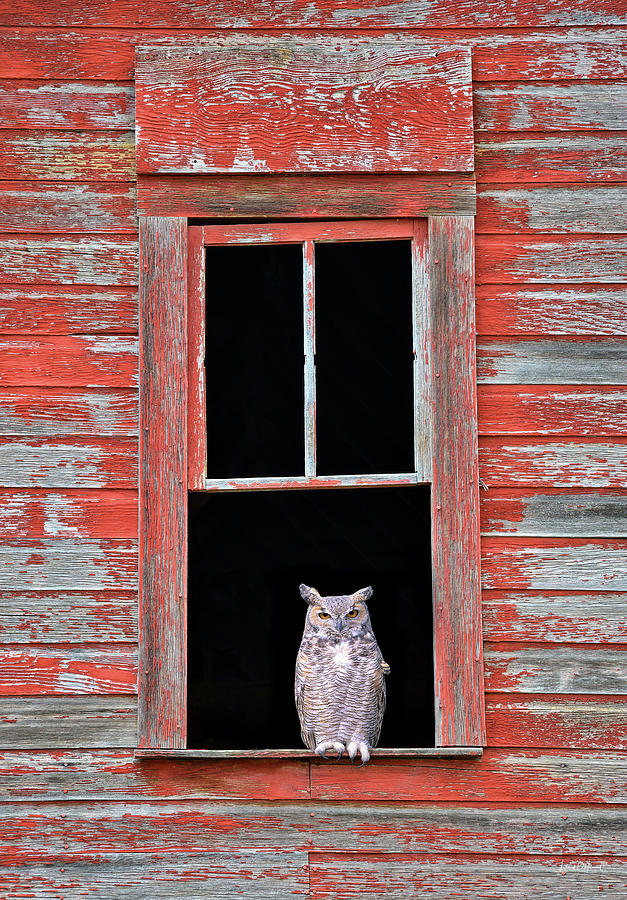 Barn Wood Photograph - Owl Window by Leland D Howard