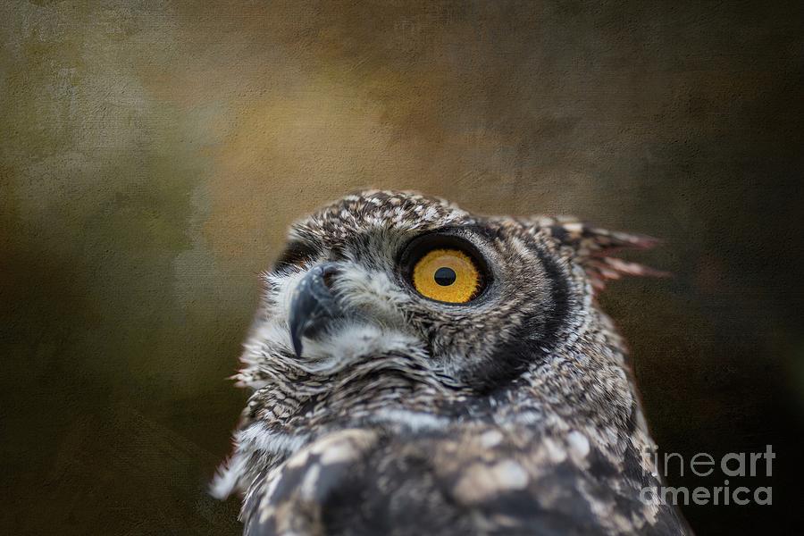 Owl's Eye by Eva Lechner