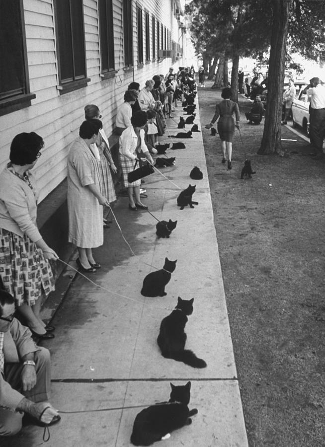 Owners With Their Black Cats, Waiting In Photograph by Ralph Crane