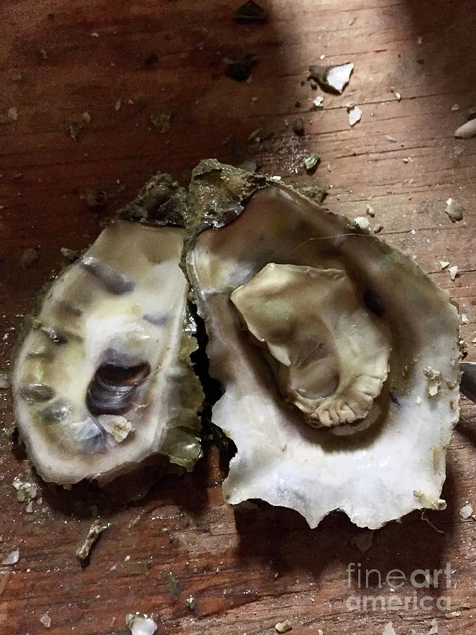 Oyster by Flavia Westerwelle