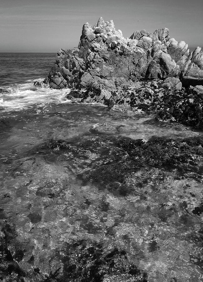 Pacific Grove Outcrop by Patrick Cosgrove