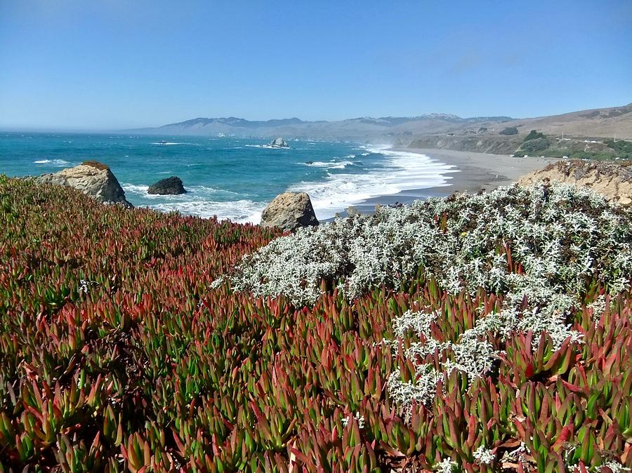 Pacific Ocean Succulents by Kathy Ozzard Chism