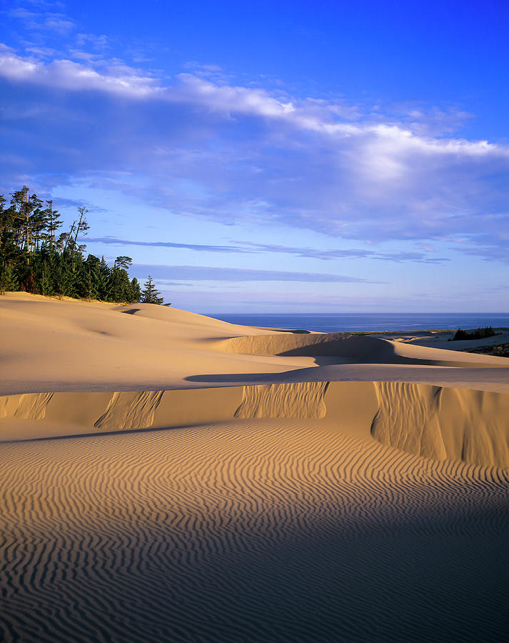Pacific Sand by Robert Potts