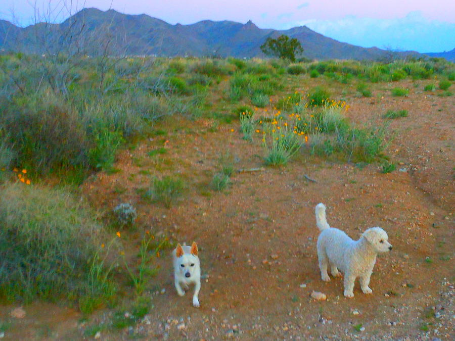 Good Photograph - Paco And Cesar Love The Desert by James Welch