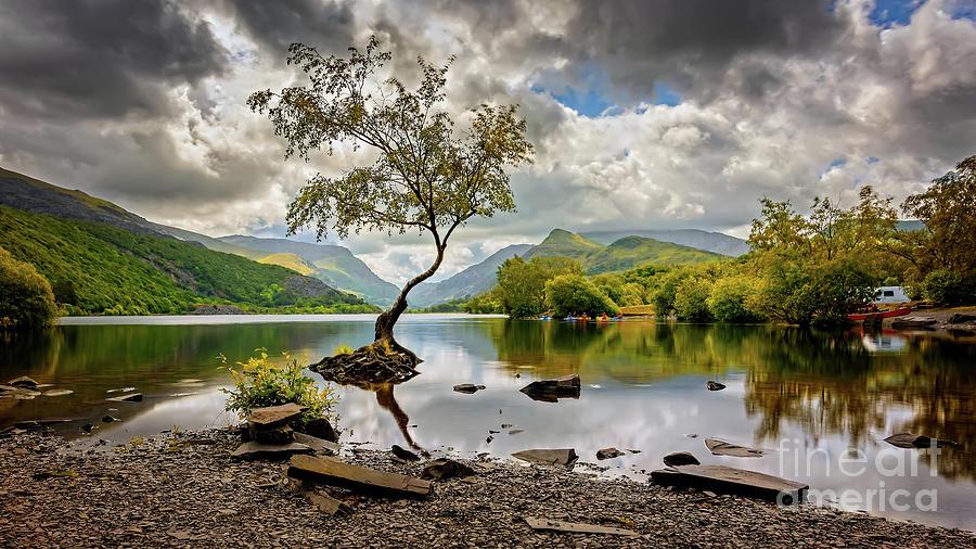Padarn lake Tree  by Adrian Evans