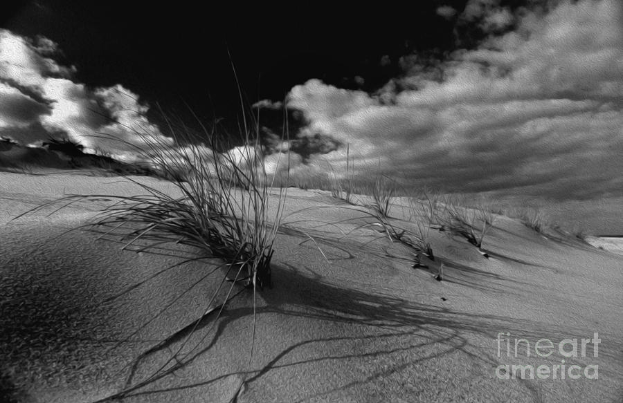 PAINTED BLACK AND WHITE DUNE GRASS by Skip Willits