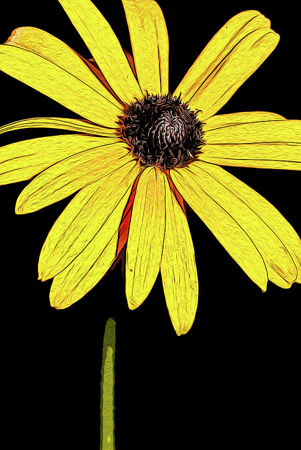 Painted Black-eyed susan portrait by onyonet  photo studios