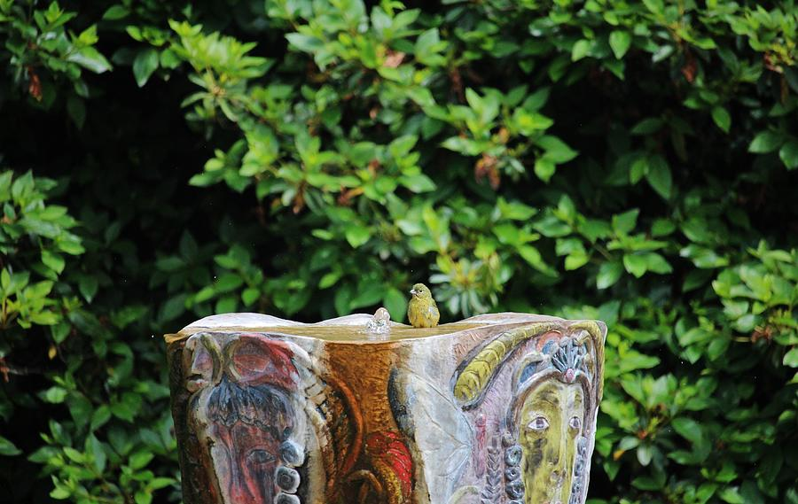 Painted Bunting Female by Cynthia Guinn
