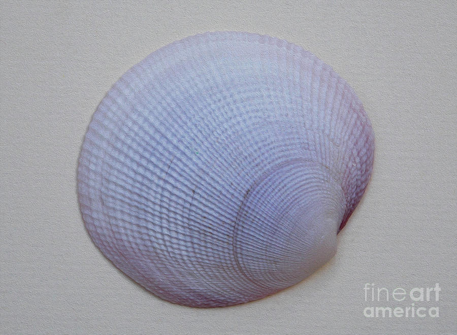 Painted Clam Shell No 26 Photograph