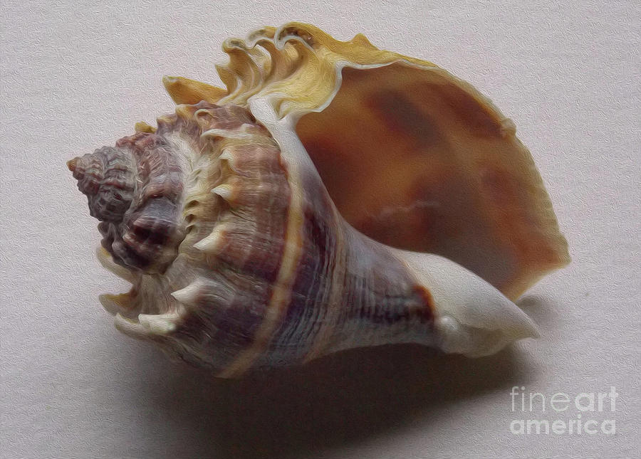 Painted Conch Shell No 20 Photograph
