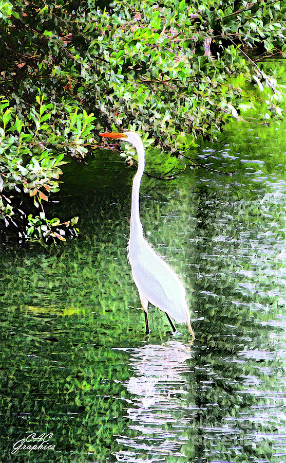 Painted Egret by CAC Graphics
