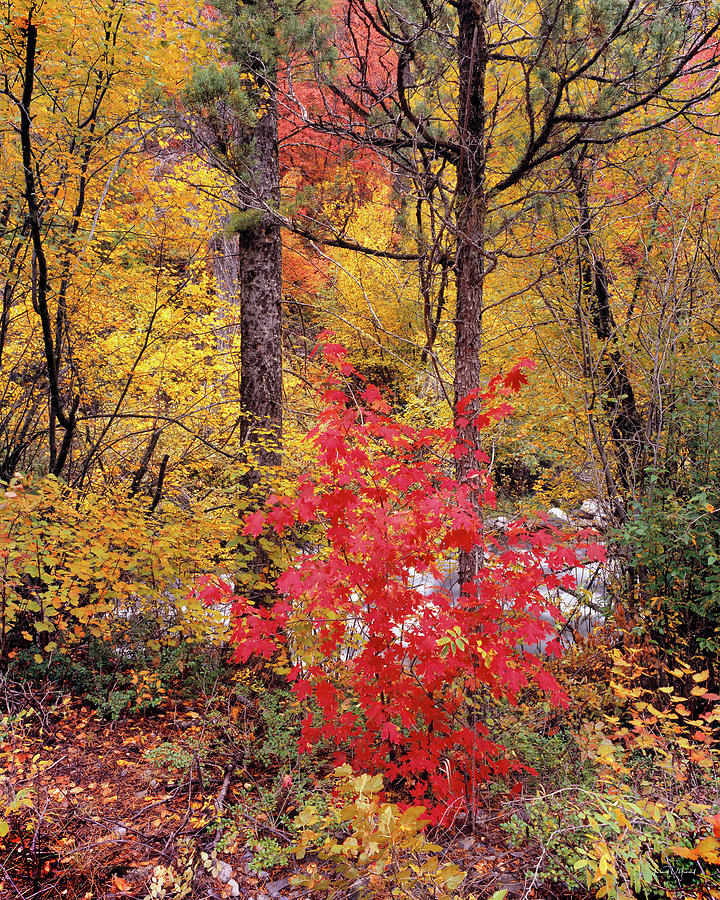 Autumn Photograph - Painted Forest by Leland D Howard