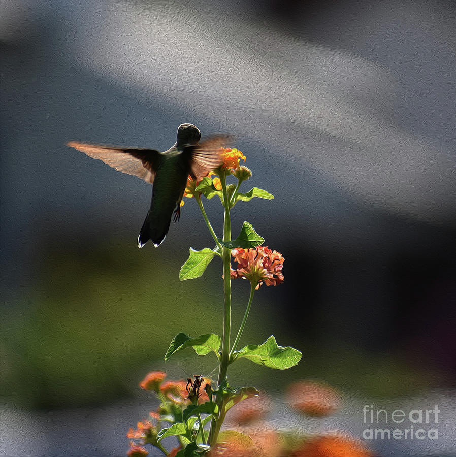 PAINTED HUMMING BIRD by Skip Willits