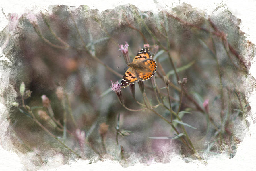 Pink Photograph - Painted Lady Butterflies in Digital Watercolor by Colleen Cornelius
