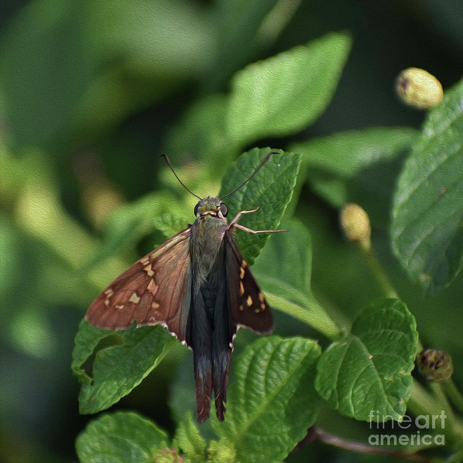 PAINTED LONG TAIL SKIPPER NO 3 by Skip Willits