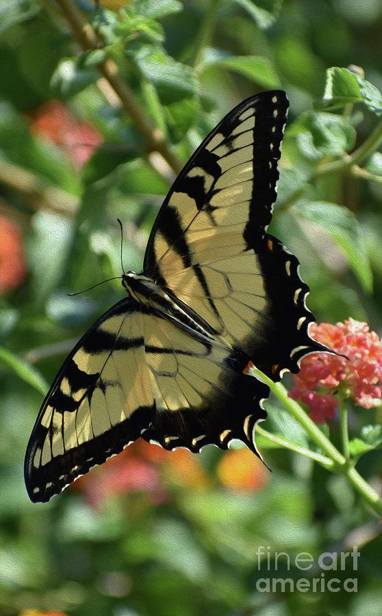 PAINTED PERFECT SWALLOWTAIL by Skip Willits