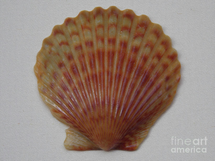 Painted Scallop Shell No 21 Photograph