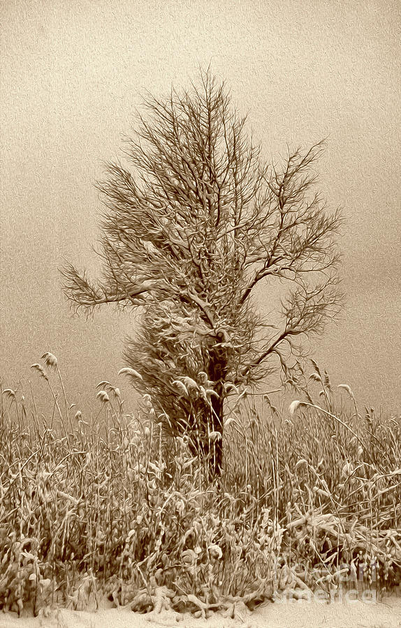 PAINTED SEPIA FIRST SNOW by Skip Willits