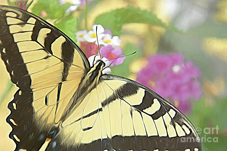 Painted Swallowtail by Amy Dundon