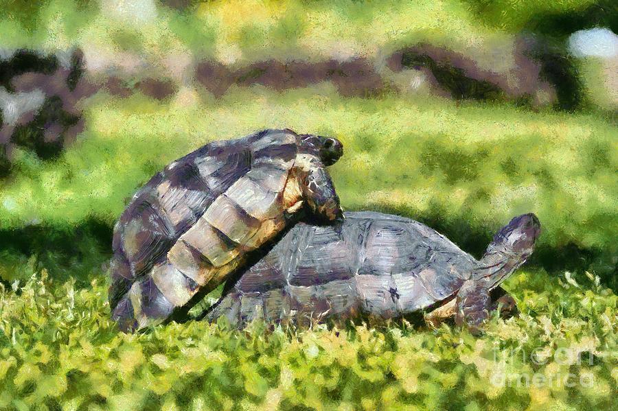 Painting of mating turtles by George Atsametakis
