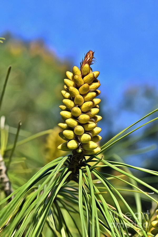Painting of pine tree buds  by George Atsametakis