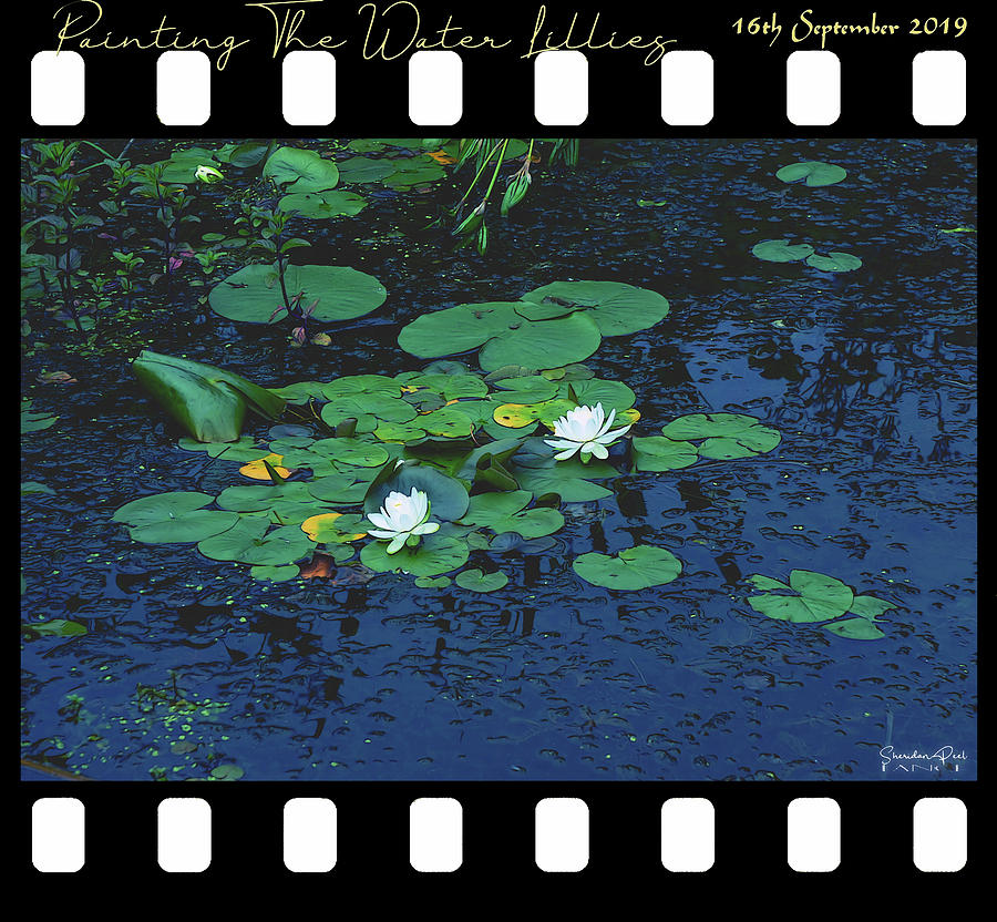 Painting The Water Lillies by Lance Sheridan-Peel