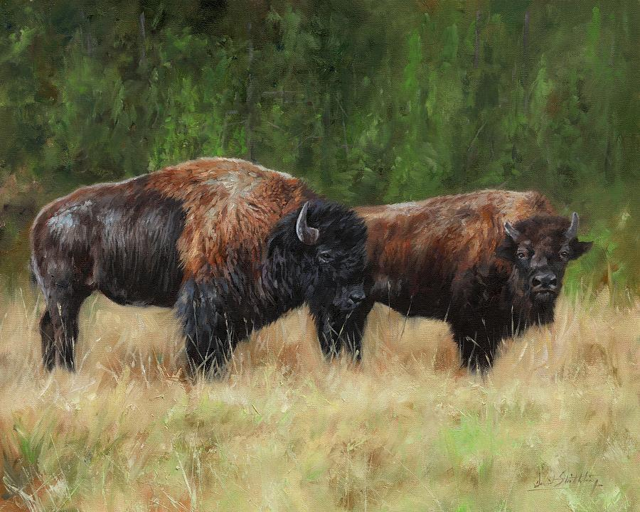 Pair of Bison by David Stribbling