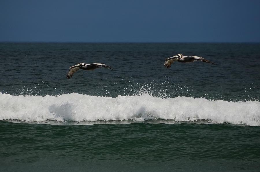Pair of Pelicans in Flight by Jordan Paw
