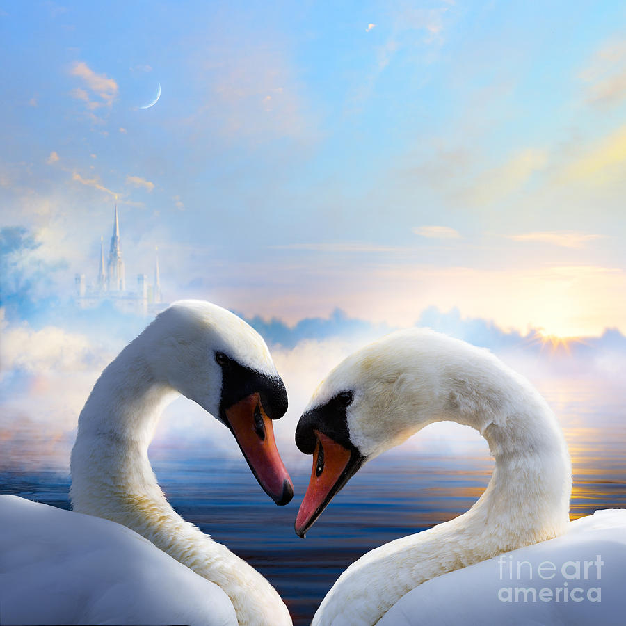 Romance Photograph - Pair Of Swans In Love Floating On The by Konstanttin