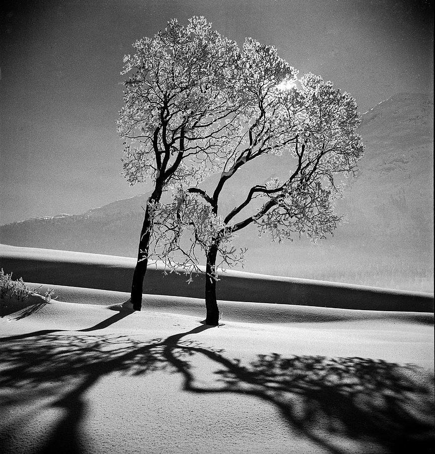 Pair Of Trees On A Snow Covered Photograph by Alfred Eisenstaedt