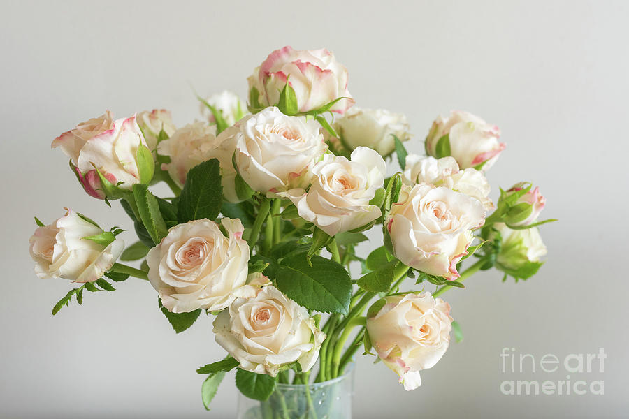 Background Photograph - Pale pink roses by Natalie Board