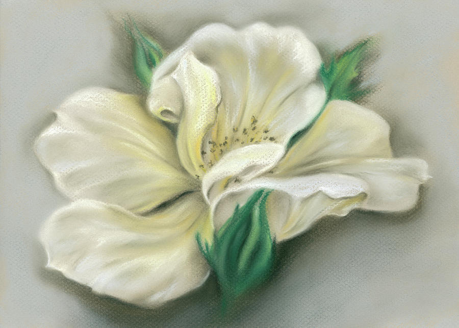 Pale Yellow Rose and Green Rosebuds by MM Anderson