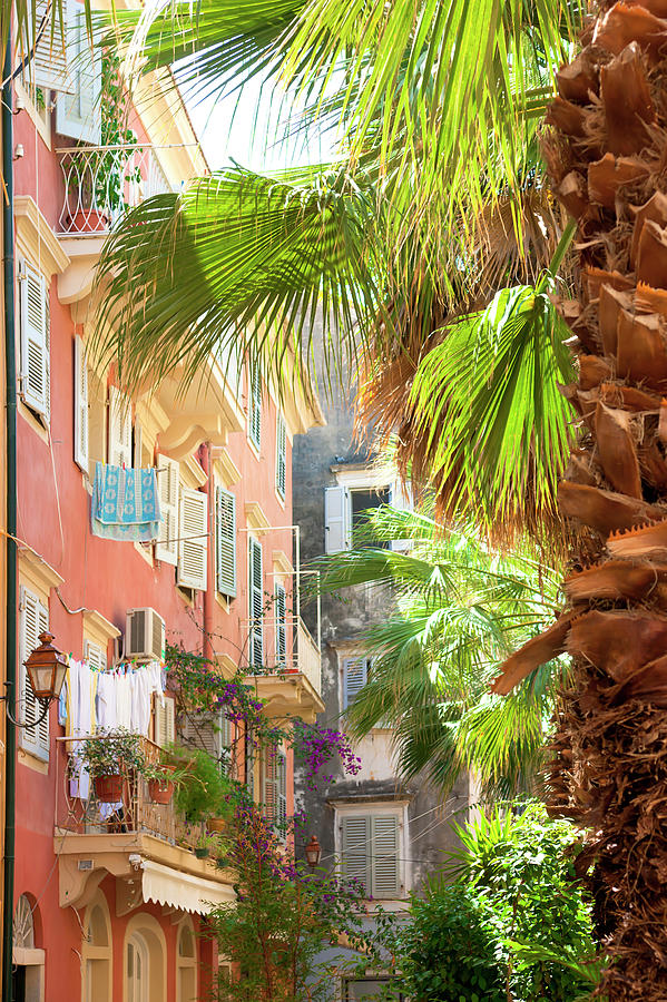 Palm and city by Anna Kluba