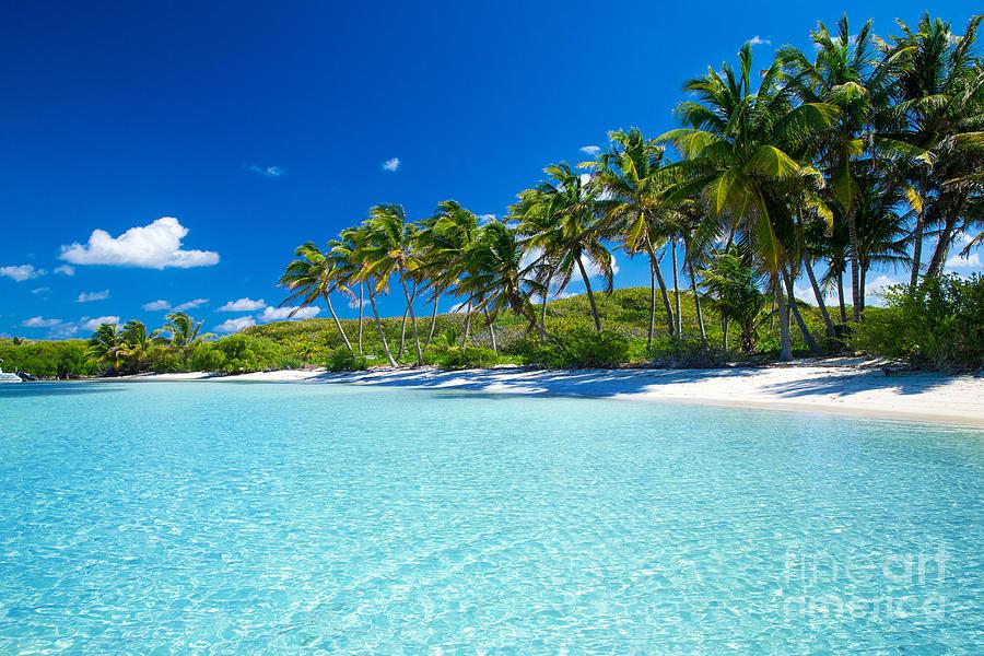 Palm Photograph - Palm And Tropical Beach by Akugasahagy