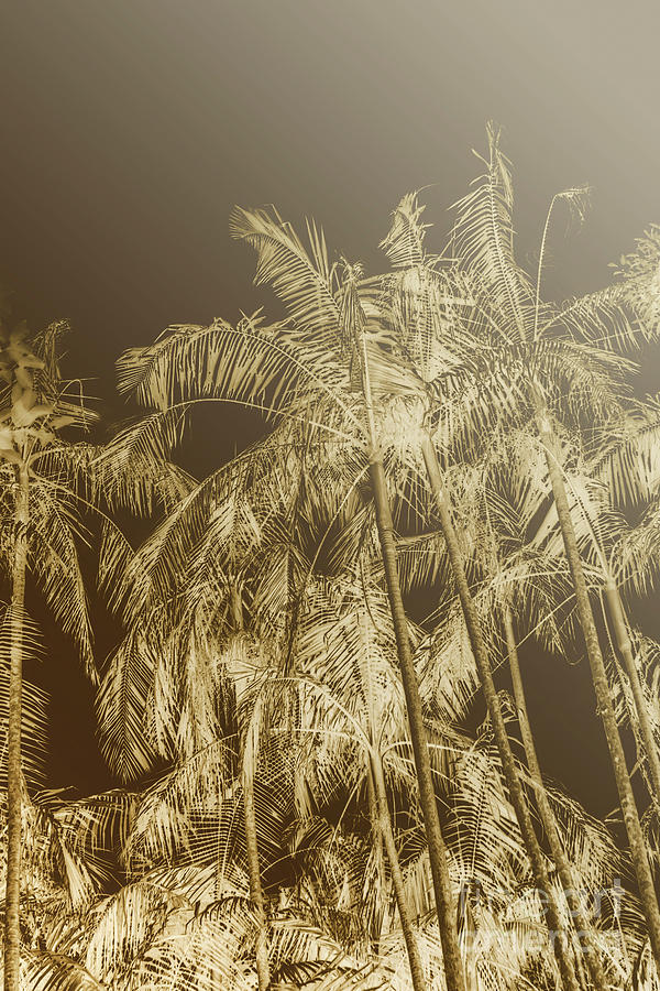 Tropical Photograph - Palm Dynamics by Jorgo Photography - Wall Art Gallery