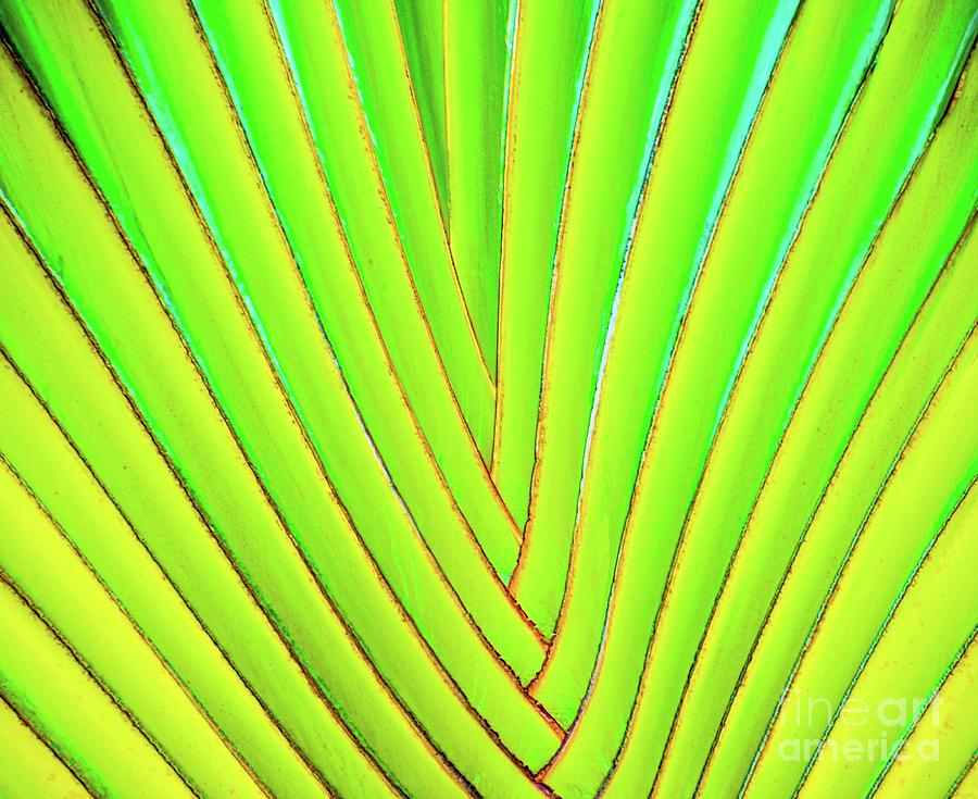 Frond Photograph - Palms And Fronds - Hawaii by D Davila
