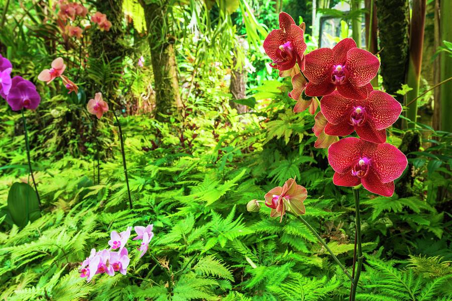 Abundant Photograph - Palm Jungle Trail At Hawaii Tropical by Russ Bishop