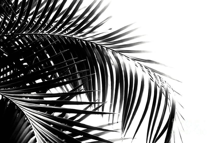 Palm Leaves Black And White Vibes 3 Tropical Decor Art Mixed Media By Anitas And Bellas Art Black and white tropical leaves botanical instant download art print. palm leaves black and white vibes 3 tropical decor art by anitas and bellas art