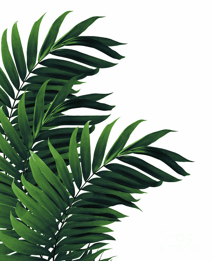 Palm Leaves Tropical Green Vibes 1 Tropical Decor Art Mixed Media By Anitas And Bellas Art Are you searching for tropical leaves png images or vector? palm leaves tropical green vibes 1 tropical decor art by anitas and bellas art