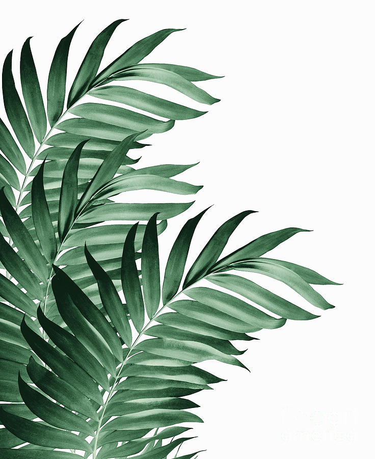 Palm Leaves Tropical Green Vibes 3 Tropical Decor Art Photograph By Anitas And Bellas Art Search more hd transparent tropical leaves image on kindpng. palm leaves tropical green vibes 3 tropical decor art by anitas and bellas art