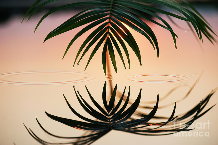 Palm Photograph - Palm Light Reflection by Tim Gainey