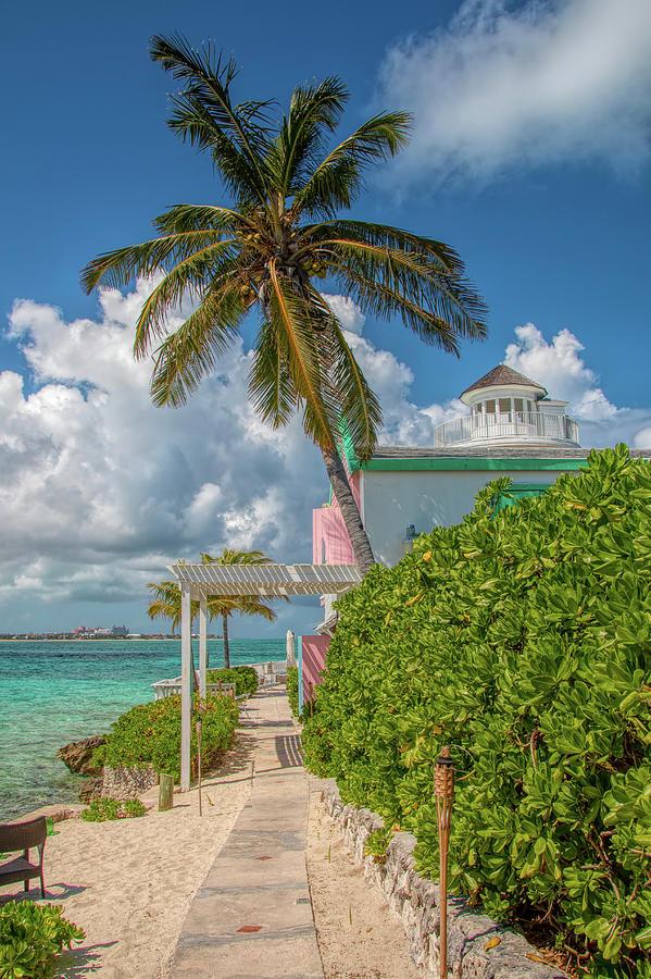 Palm On Pearl Island by Kristia Adams