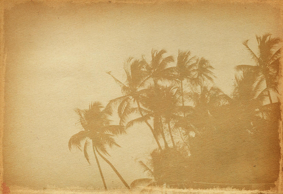 Palm Paper Photograph by Nic taylor